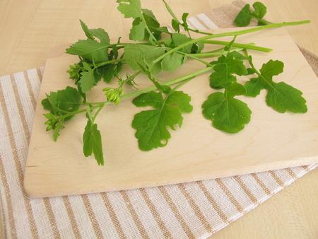 mustard leaf: Mustard leaves as culinary herbs