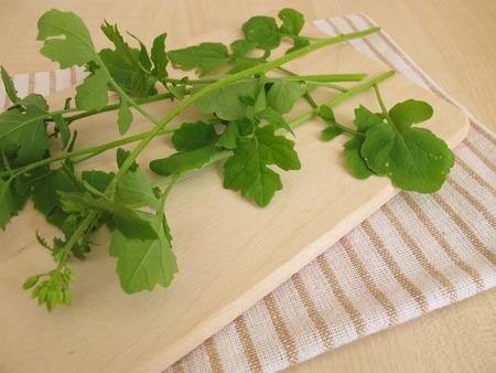 kulinarne: Mustard leaves as culinary herbs