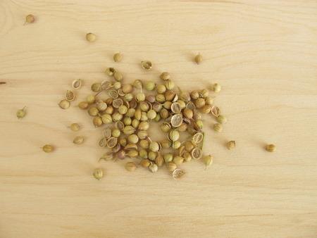 culantro: Semillas de cilantro  Foto de archivo