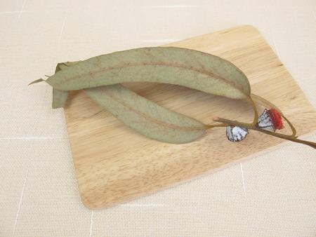 naturopathy: Dried eucalyptus twig with fruits