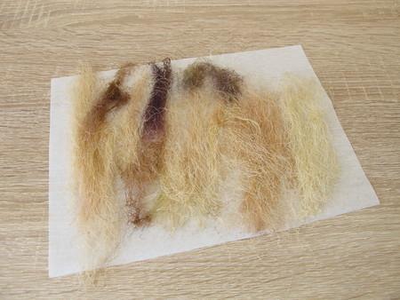 Dried corn silk, maydis stigma Фото со стока - 91954389