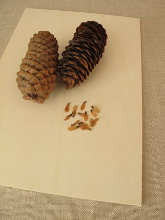 Cones and edible seeds of the spruce