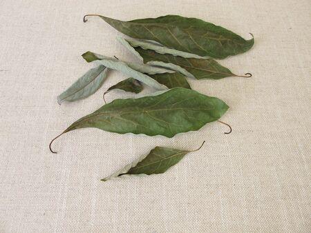 Dried avocado leaves from the avocado tree