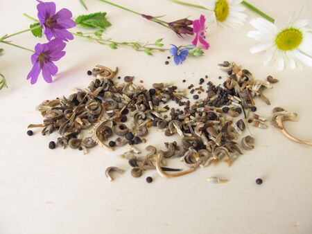 Bee friendly seed mixture and wildflowers for wild bees and other insects