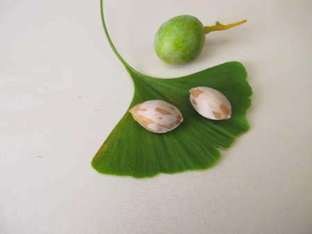 Ginkgo seeds or nuts and a leaf from the tree, Ginkgo biloba