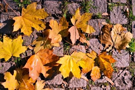 autumn Stock Photo - 13700470