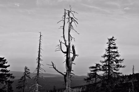 destruction of forests photo