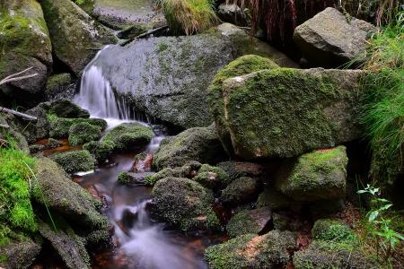 kleinen Bach im Nationalpark Harz Lizenzfreie Bilder