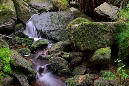 small stream in the Harz National Park photo