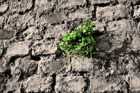 Plant as a survival artist on a wall Stock Photo - 17045011