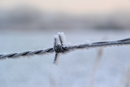 Barbed wire in cold weather in winter photo