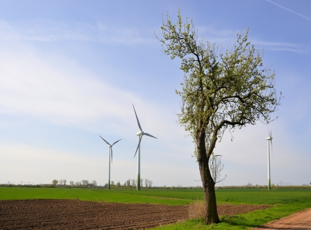 electricity tariff: several wind turbines and a tree on a field