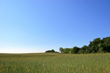 Natural landscape and barley field