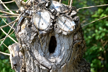 oddity: Tree with face