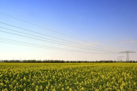 Electricity pylons in a field of rape