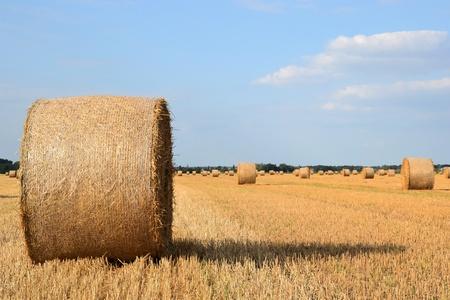 feld: Stroh rollt auf einem Feld