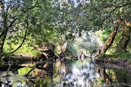 floodplain: Nature Reserve in Brandenburg