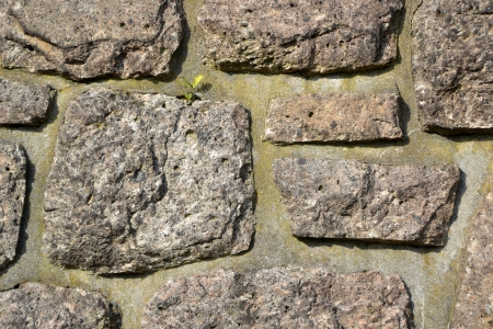 Stone wall with plant Stock Photo - 22507043