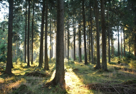 Forest at the foot of the Brocken photo