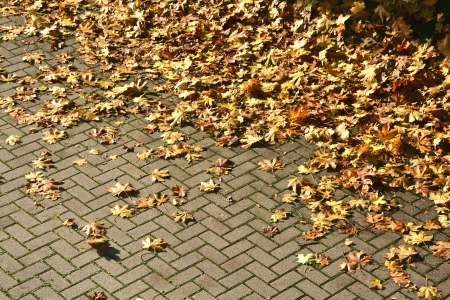 Autumn leaves on a way photo