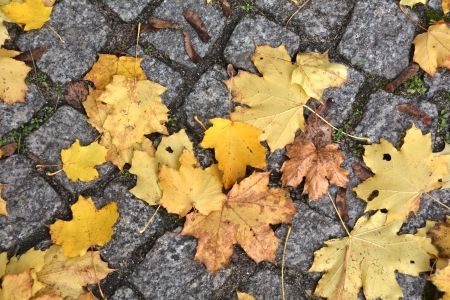 Autumn leaves on the road photo