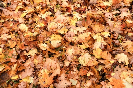 Autumn leaves on a road photo