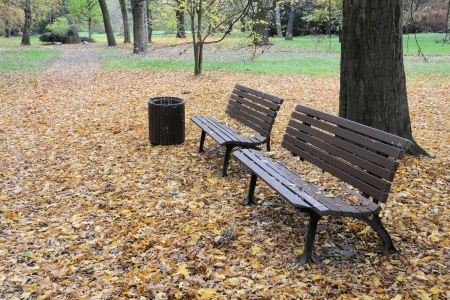 Benches in a park in autumn photo