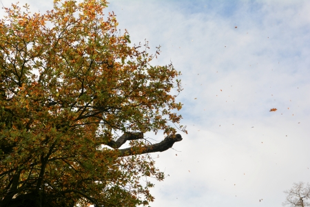flying leaves in autumn storm