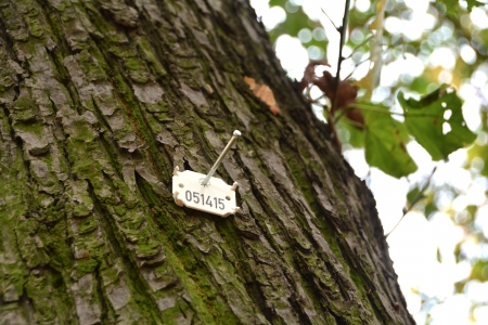 forest management: tree count