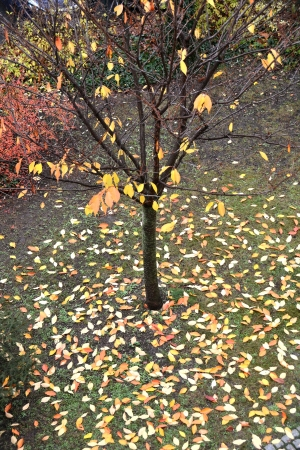 The foliage of a tree in autumn photo