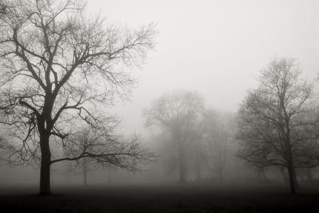 Park landscape engulfed in fog photo