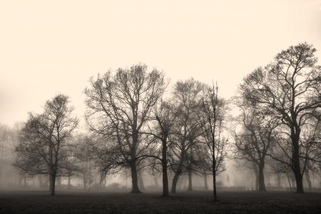 Park landschap opgeslokt in de mist Stockfoto
