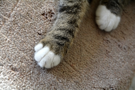 cat paws on ground Standard-Bild
