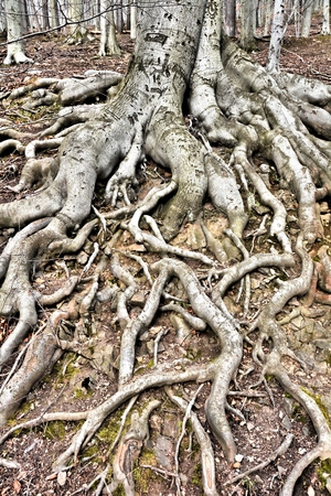 rooted: tree roots