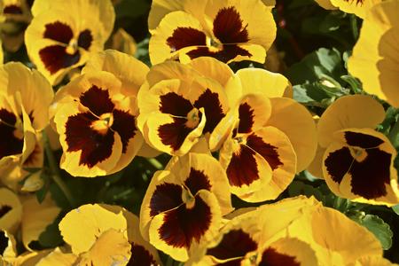 springtime: Springtime Stock Photo