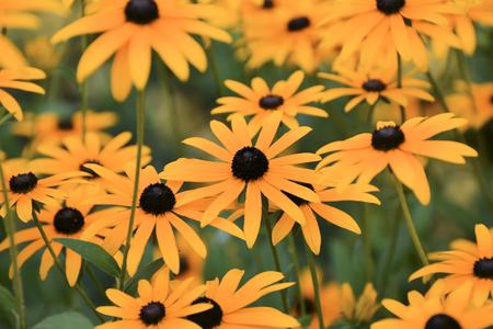 summer flowers in a garden photo