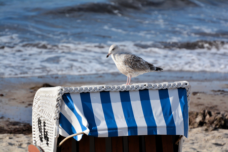 eine M�we auf einem Liegestuhl am Ostseestrand