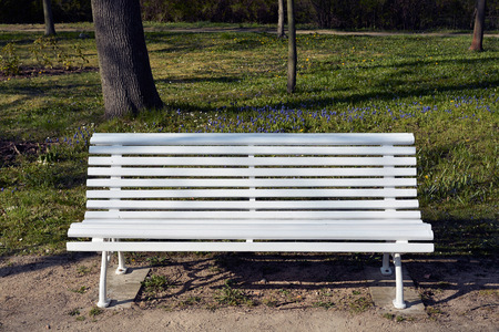 wooden bench: white wooden bench in a park in spring Stock Photo