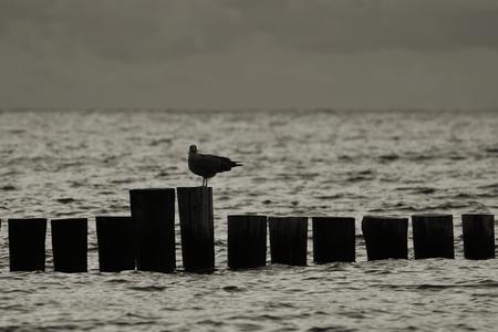 groyne: Evening at the Baltic Sea beach at Heiligendamm