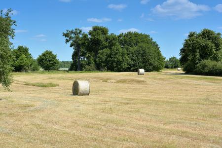 pastureland: Hay rolls in A Natural landscape