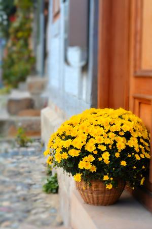 decorative balconies: Blooming Flowers in front of a door in Quedlinburg