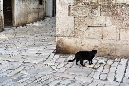 gato negro: gato negro en la ciudad vieja de Rovinj en Croacia Foto de archivo