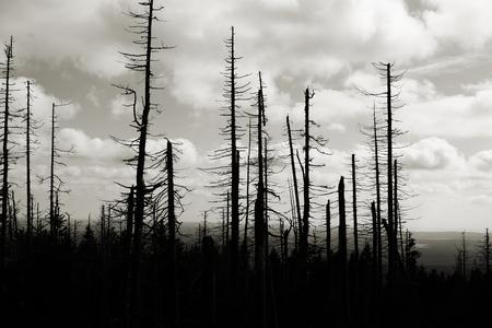 vom Borkenkäfer beschädigt Wald am Fuße des Brocken im Nationalpark Harz
