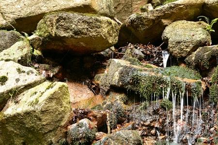 springwater: Spring in Ilsenburg in the Harz National Park