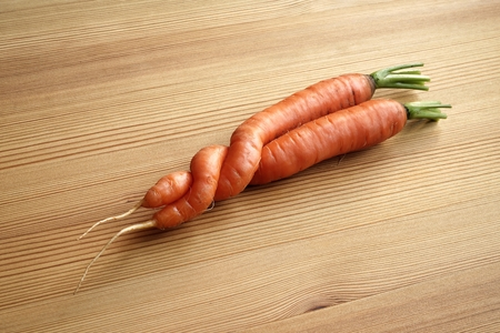 misshapen: Two entwined carrots a freak of nature