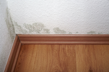 fungal: Mold in a rented apartment
