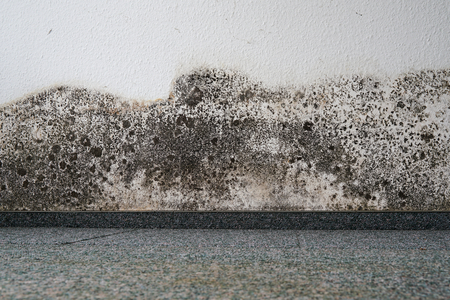 schimmel op de muur van een appartement