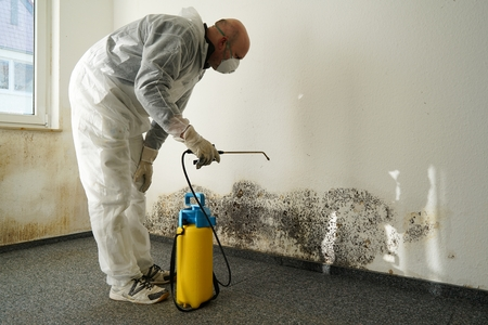 specialist in Combating mold in an apartment Foto de archivo