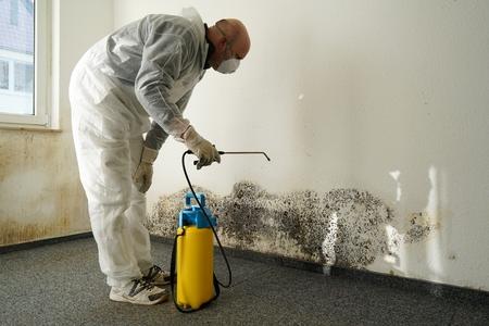 specialist in de bestrijding van schimmels in een appartement Stockfoto