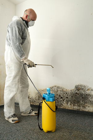 specialist in Combating mold in an apartment Stock Photo